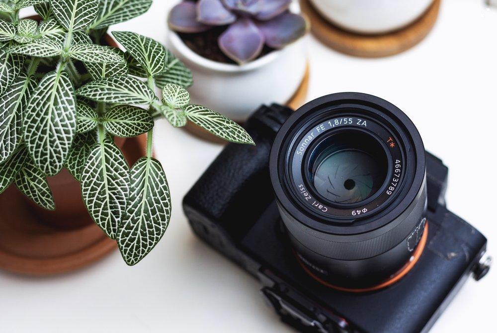 Fotocamera sony e piantine